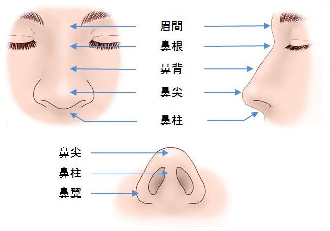鼻の解剖01
