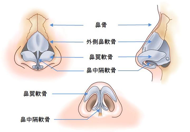 鼻の解剖02