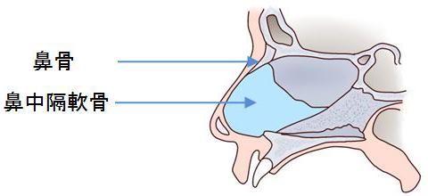 鼻の解剖03