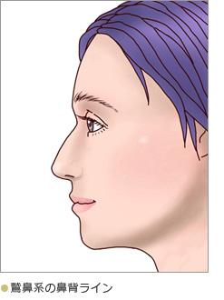 鷹鼻系の鼻背ライン
